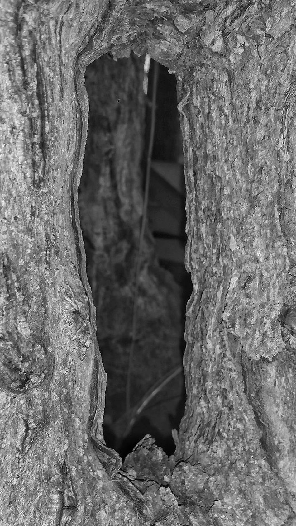 Close-up Textured  Nature No People Day Tree Beauty In Nature Outdoors Black And White Monochrome Frame Hole In Tree Natures Diversities Diversity In Nature Tree Hole Unusal Hole Shapes In Nature  Natural Frame View Through Trees Shapes In Nature  Tree_collection  Shapes And Forms TreePorn Tree Frame