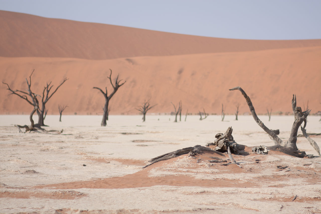 Beautiful stock photos of desert, Arid Climate, Bare Tree, Beauty In Nature, Day