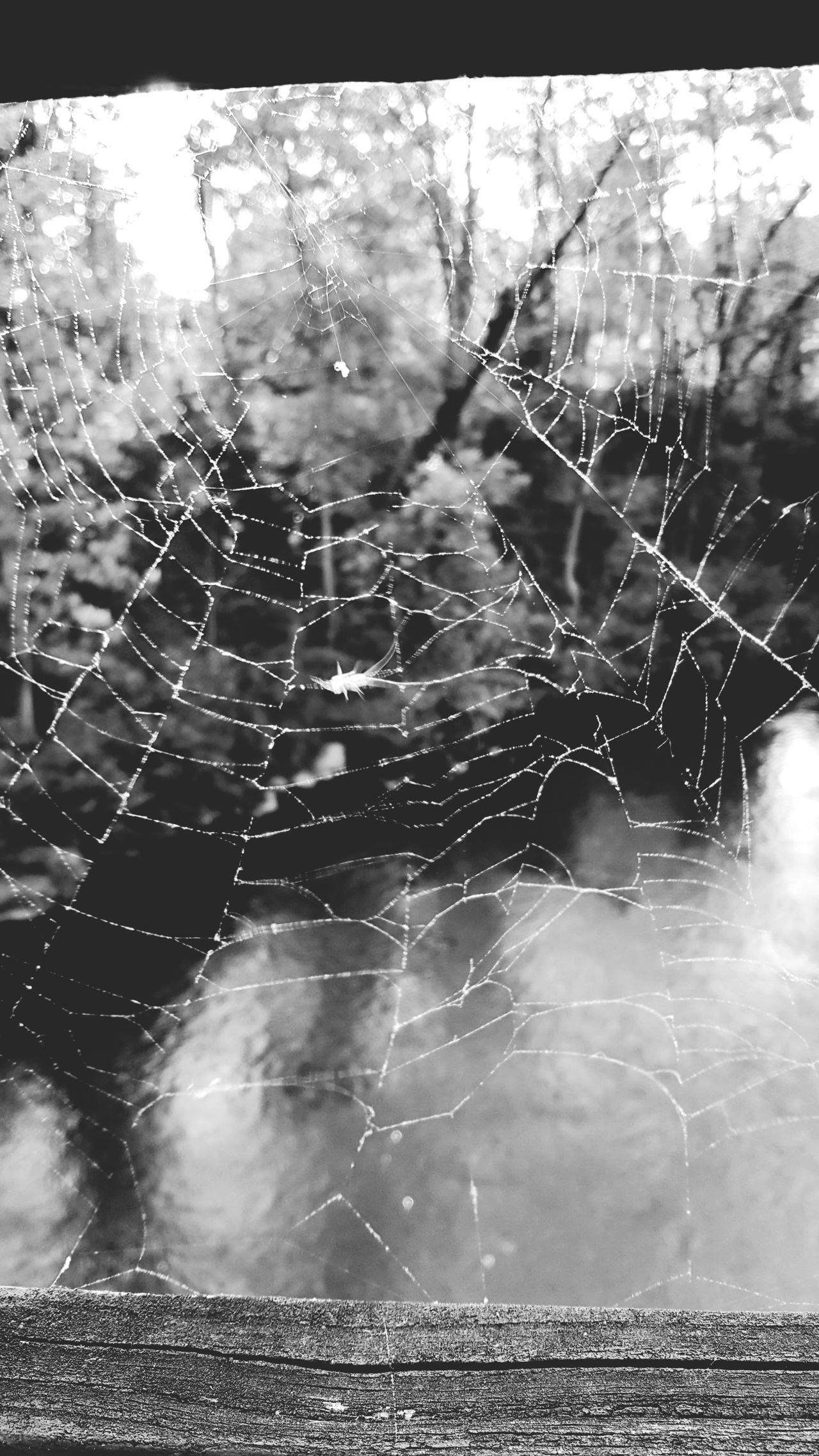 Nature Spider Web Outdoors Water No People Day Beauty In Nature Green Color Web Close-up Blackandwhite Black And White Beauty In Nature Black & White No Colors No Color Tranquility