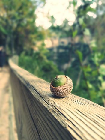Wooden Focus On Foreground Green Color Wood - Material SPAIN Edited Acorn Close-up