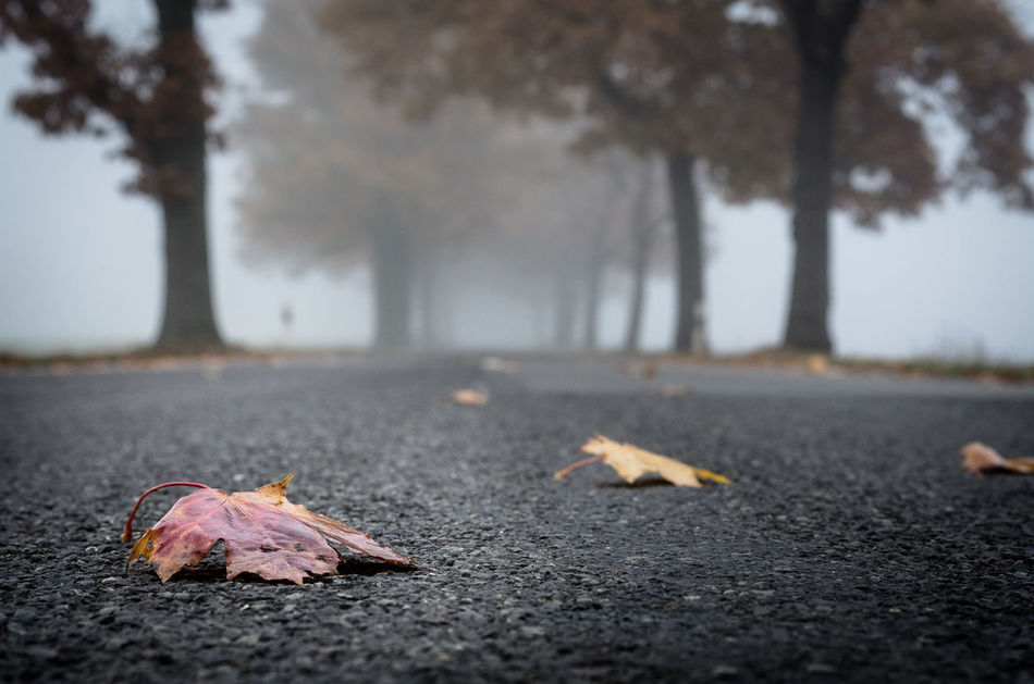 stret and fog and leaf Autumn Autumn Beauty In Nature Change Close-up Day EyeEm Best Shots EyeEm Nature Lover Gone Good Morning Leaf Low Angle View Nature No People Old Buildings Outdoors Road Street Surface Level Tree Triste Tristesse Long Goodbye Resist The Secret Spaces