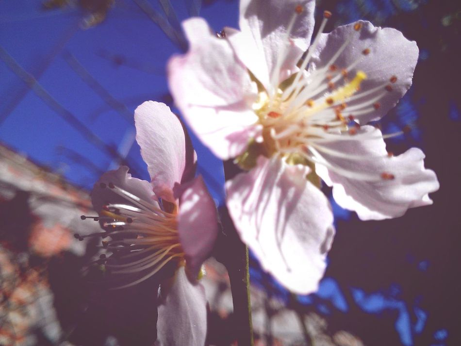 Peach flowers Taking Photos Relaxing Enjoying Life Sublime Flowers Peach Trees Fruits