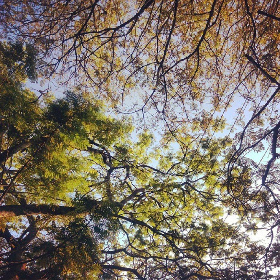 Green Tree Afternoon HTC Vscocam VSCO Bangalore Vamp Instaphotography Instapic Instabangalore Insta_karnataka Namma_bengaluru