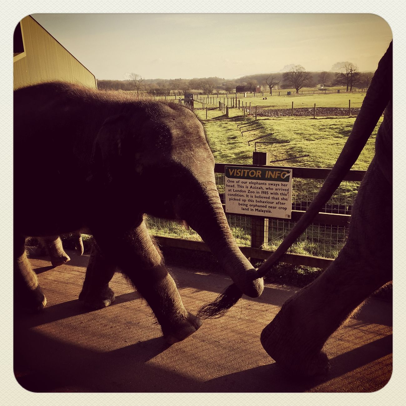 Elephants Mother & Daughter Motherhood Motherandchild Whipsnade Zoo IPhoneography