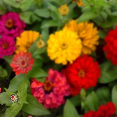 I am Flower!! Budding Flower!! Look at me :P Bloggius Beautiful Hucciofficial Flowers Flowers flowerstagram petals instabloom flowerporn florals blossom flora instaflower instanature flowersporn flowersoftheday hppyflwrs