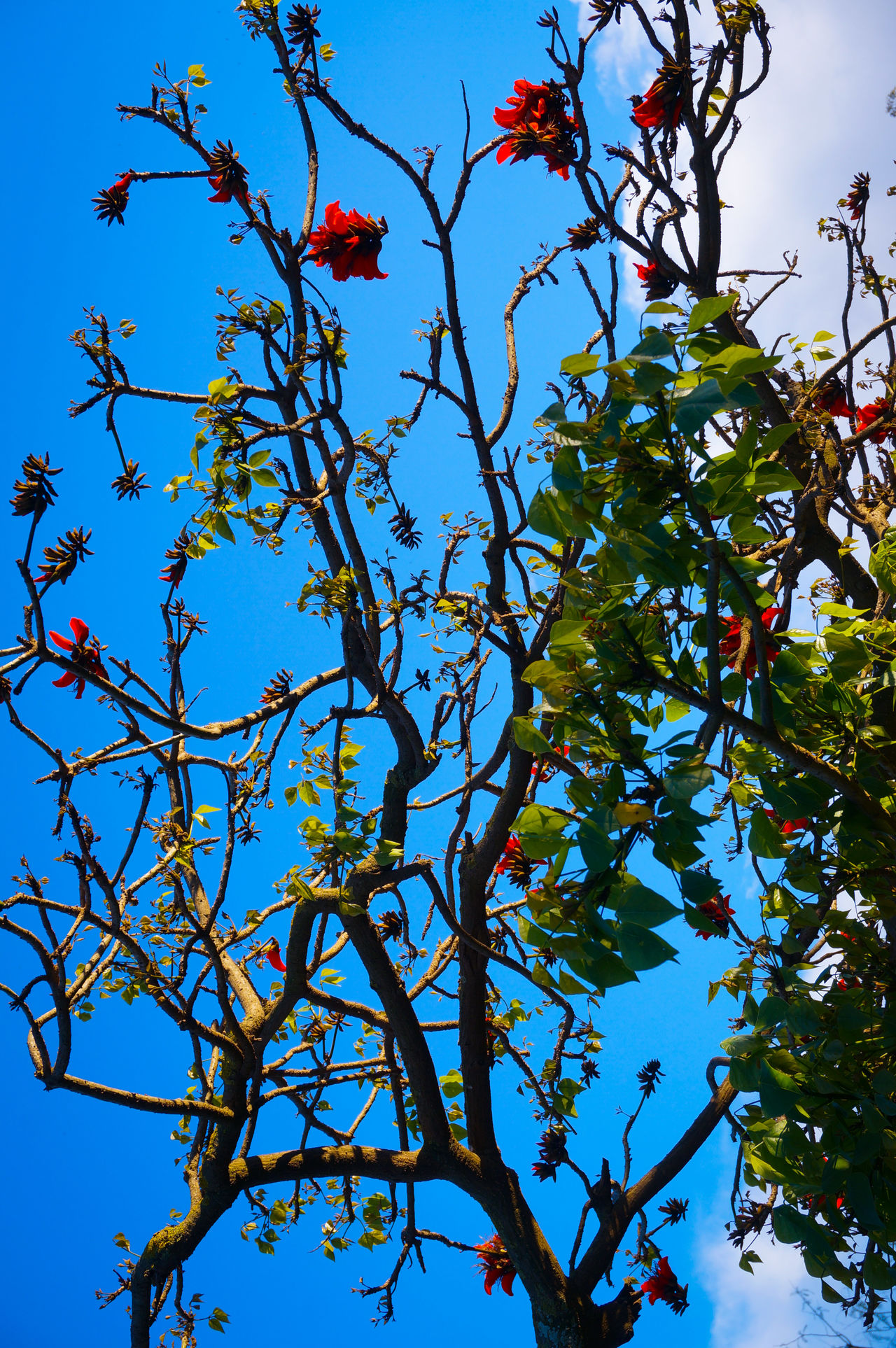 Japanese  Ambiance🏯 🌴🌸🥀🌻 Autumn Colors Autumn Leaves Under The Tree Tree Branch Red Low Angle View Sky Nature Blue Growth Plant Flower Leaf Freshness Urban Nature Life Mobilephotography Shootermag AMPt_community Vscocam VSCO Snapshots Of Life