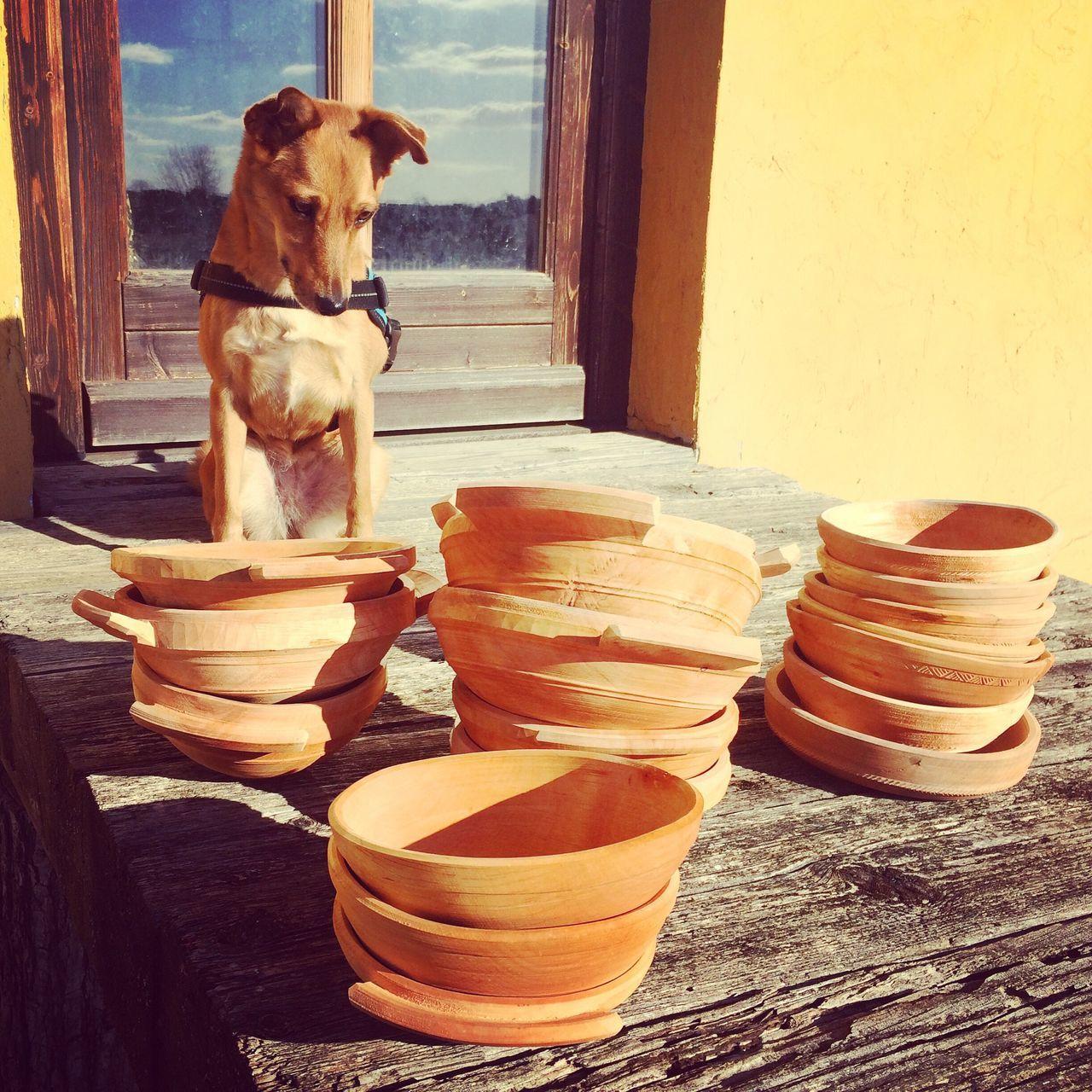 Muki és a tálak Animal Themes Dog One Animal Bowl Bowls Wood Wood - Material Wooden Pets No People Traditional