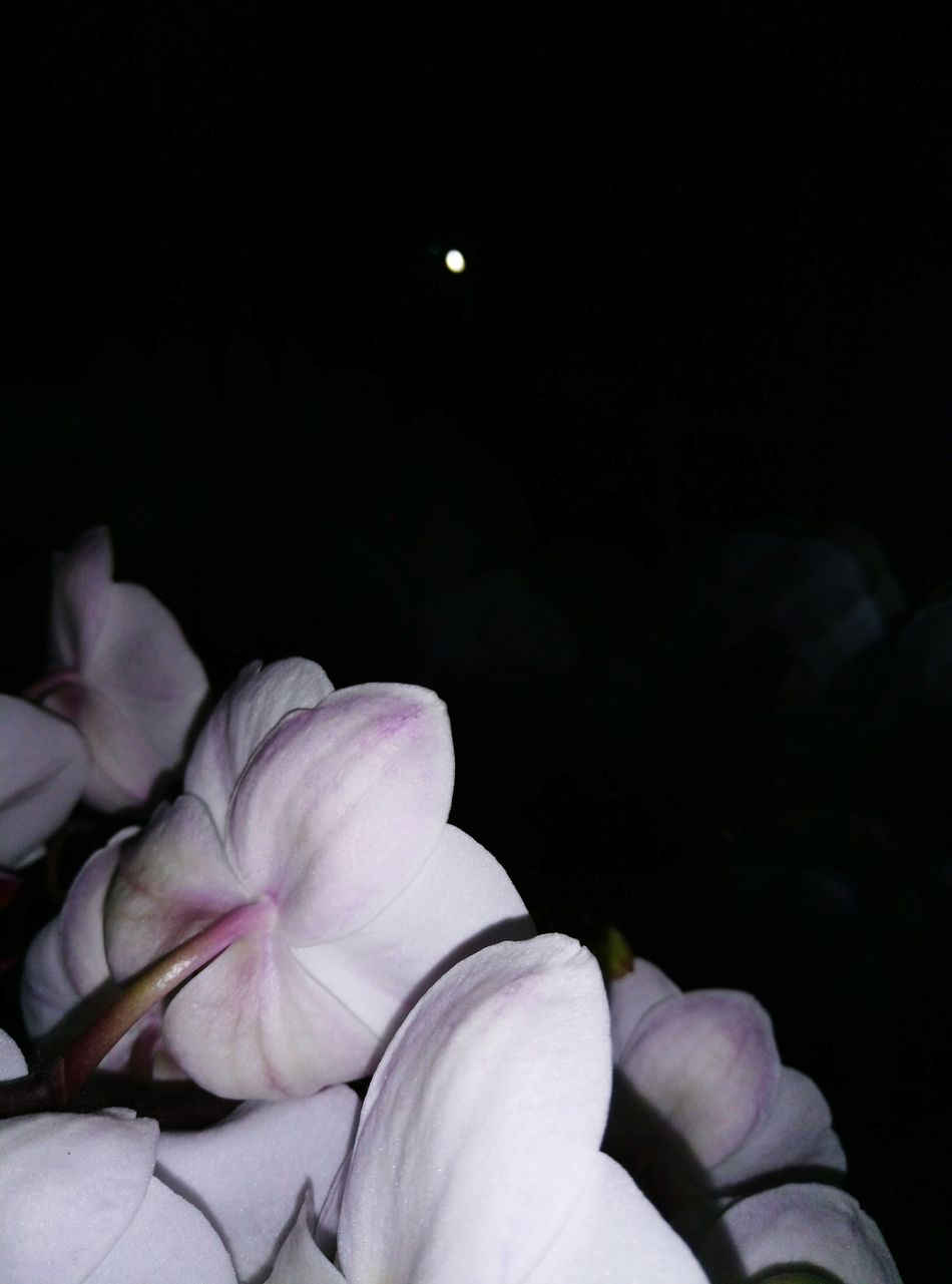 Beauty In Nature Night Nature Moon No People Flower Freshness Flower Head Inspiration Art Art Is Everywhere Ukraine Beauty In Nature Window Lights Black At Home School Tomorrow  Indoors  Instagood In Bloom Flowers, Nature And Beauty Flower Photography Space My Village