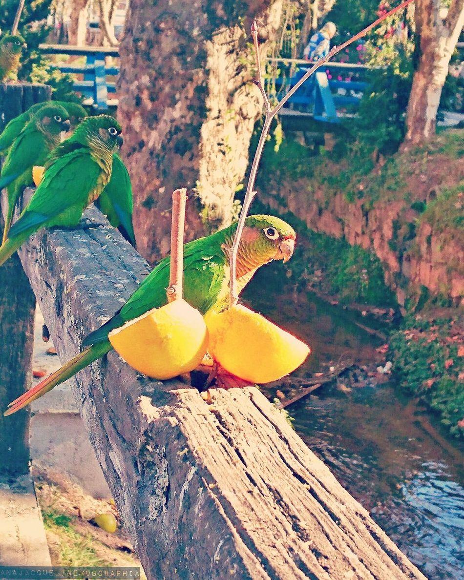 Natureza Passaro Fruta Voar Camposdojordao Mobgraphia Mobgrafia Mobilephotography Leaf Growth Nature Plant Green Color No People Fragility Animal Themes Water Outdoors Day Freshness Close-up