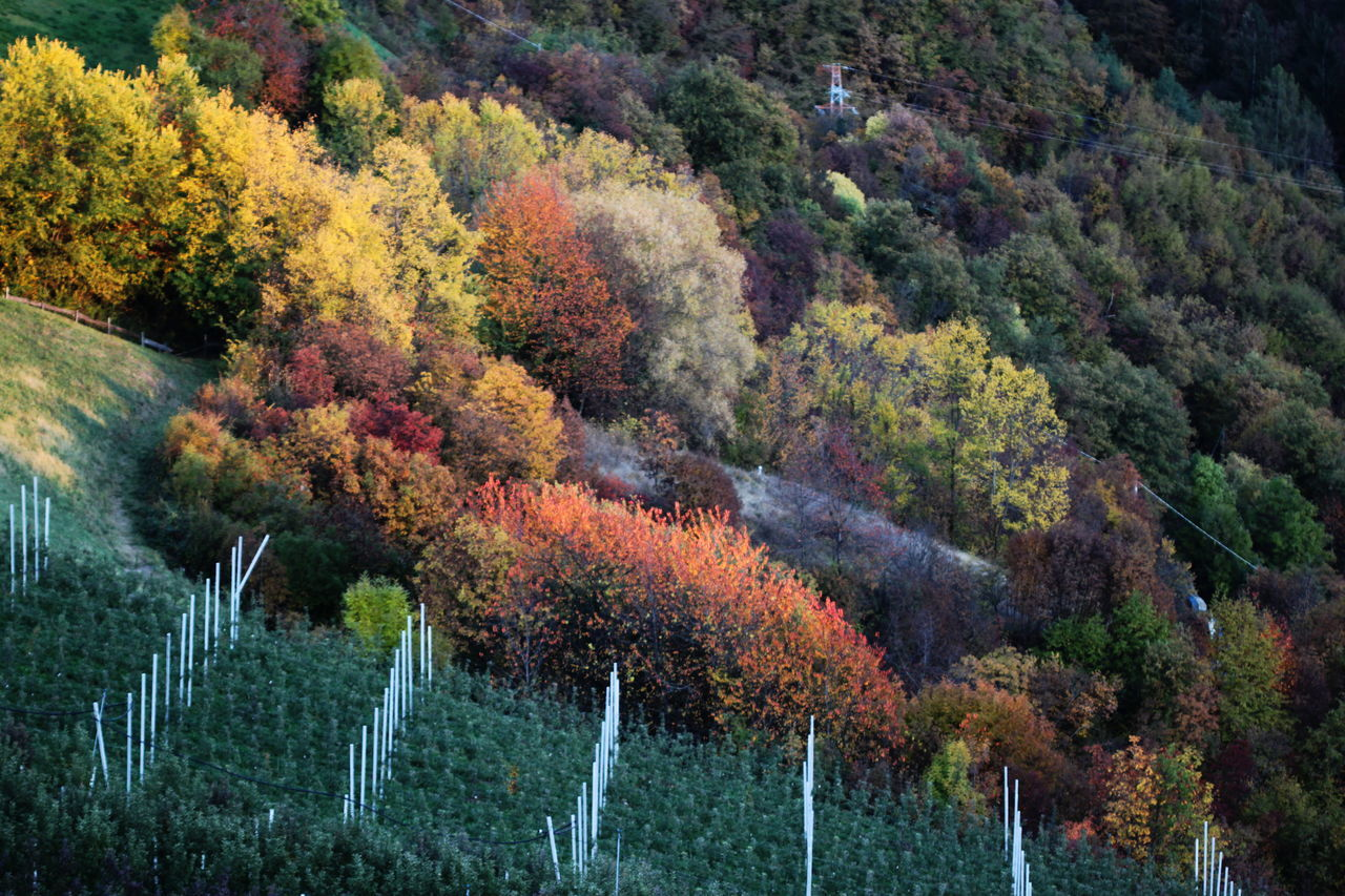 Agriculture Autumn Autumn 2016 Beauty In Nature Day Fields Fiè Allo Sciliar Full Frame Growth Italy Multi Colored Nature No People Outdoors Sun Rays Sunset Südtirol Trees And Bushes
