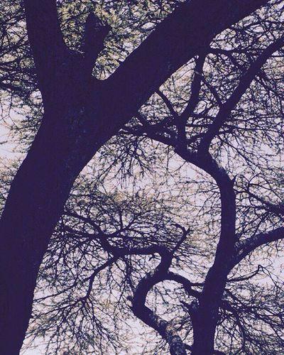 IPhone Iphonesia Photographyy Featureme Trees Life