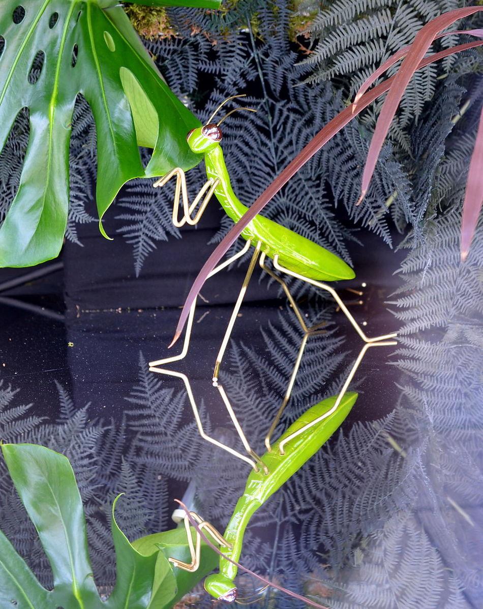 Grasshopper Animal Themes Close-up Beauty In Nature Modern Art ArtWork Reflection Mirrow Efect Green Color Green Heuschrecke Schmuck Schmuckstück Jewellery Jewellery Photoshoot