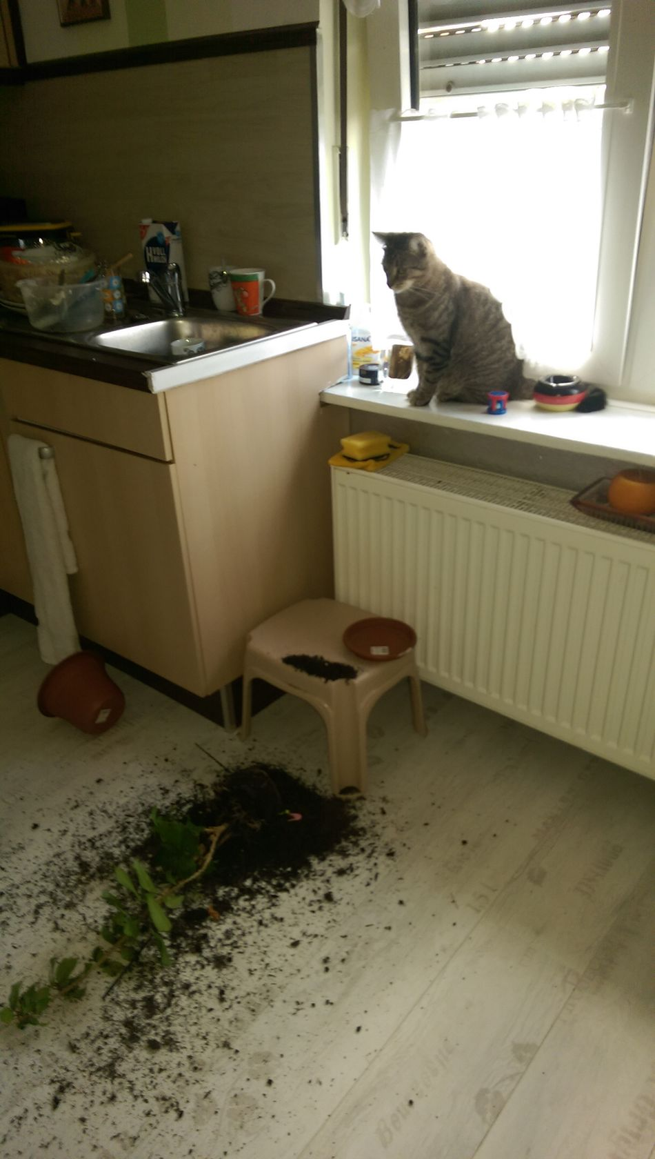 Domestic Cat Damaged Itwasntme