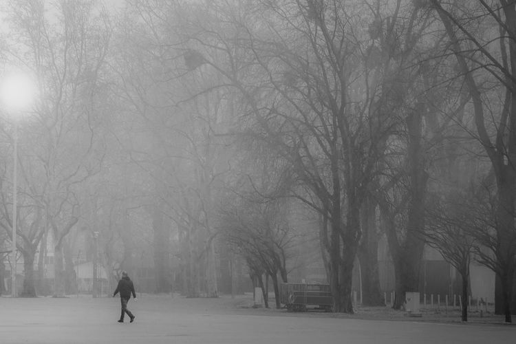 Bare Tree Blackandwhite Cold Cold Temperature Eyeem Black And White Foggy Landscape Left Behind Light Scenery Street Lights Taking Photos The Leftovers The Way Forward Walking Around Weather Showcase: February The Street Photographer - 2016 EyeEm Awards
