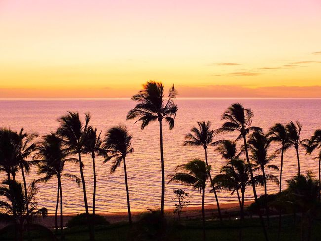43 Golden Moments Sunset Maui Hawaii Palm Trees Ocean