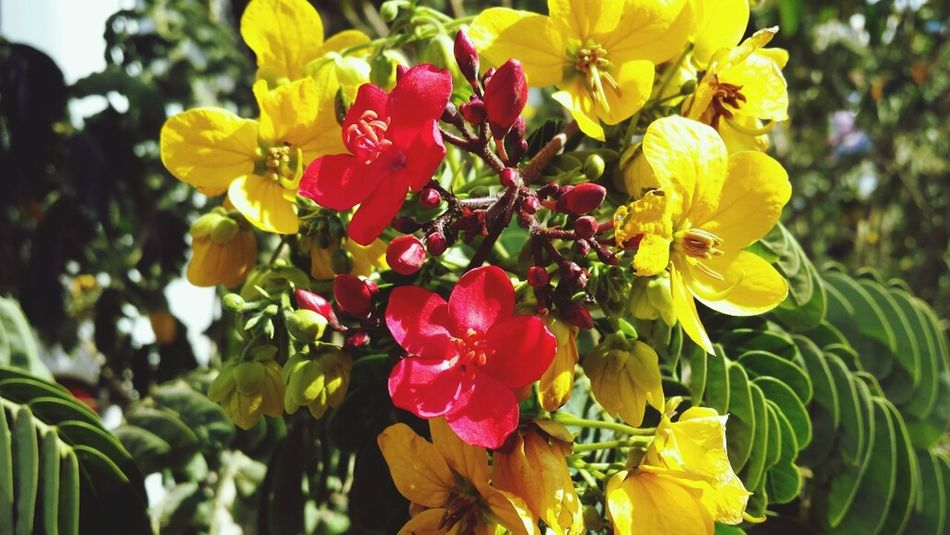 Flowers Happy & Cheerful Spirng Just Came Hello World