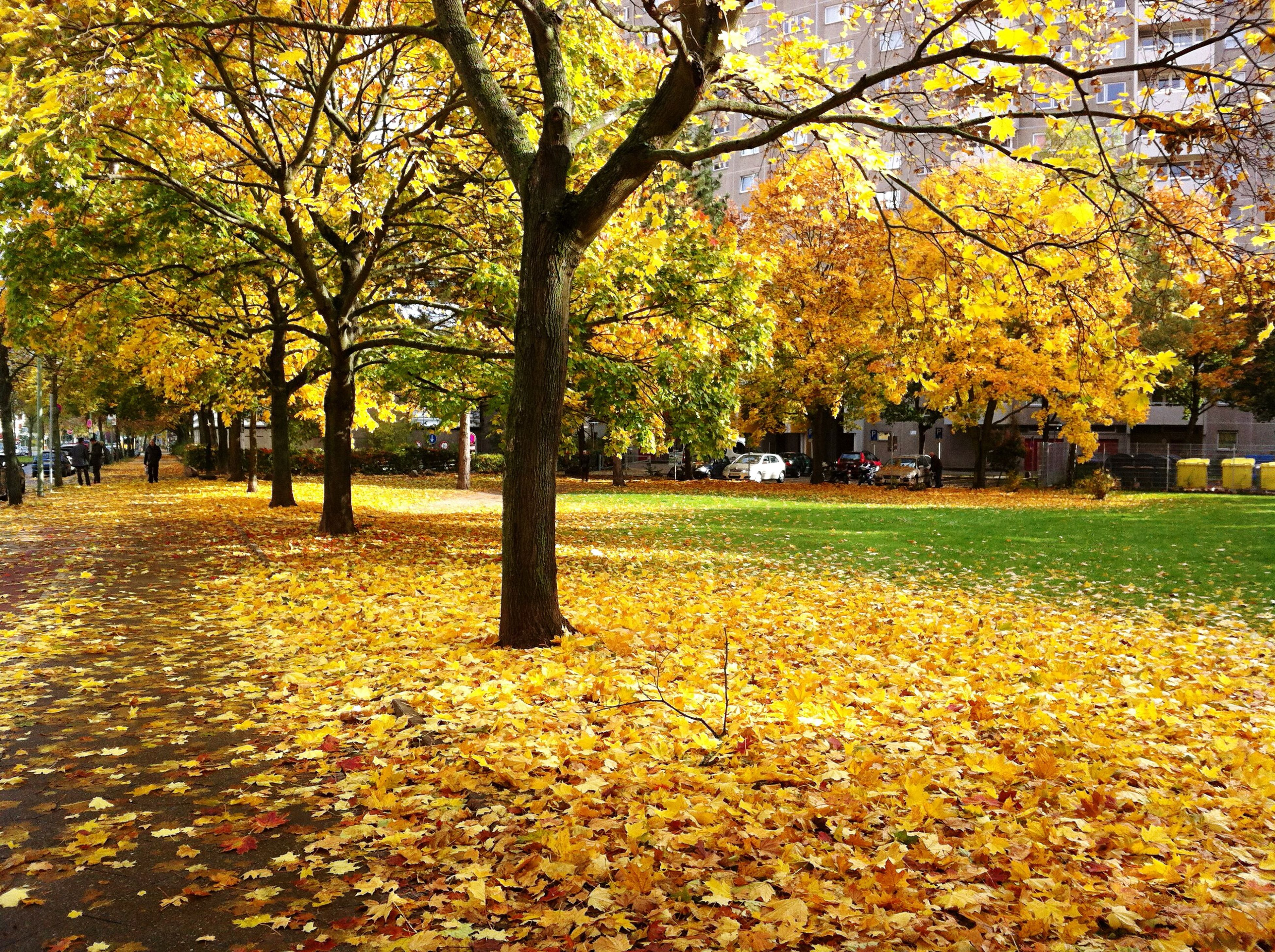 autumn, change, tree, season, leaf, yellow, beauty in nature, park - man made space, fallen, nature, growth, tranquility, park, tranquil scene, day, orange color, leaves, abundance, scenics, outdoors, falling, tree trunk, fall, no people, fragility, grass, blossom, landscape