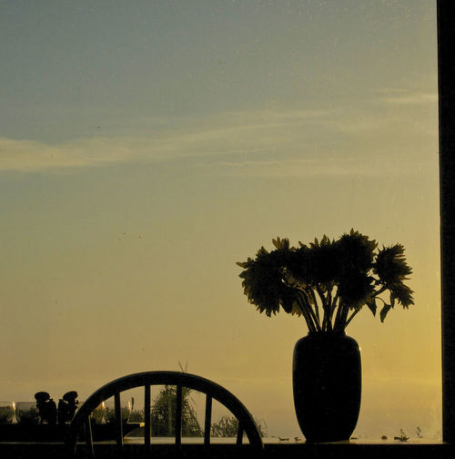 Horizon Over Land Silhouette Sunset Tranquil Scene Tranquility Vase Of Flowers View From My Sisters Window