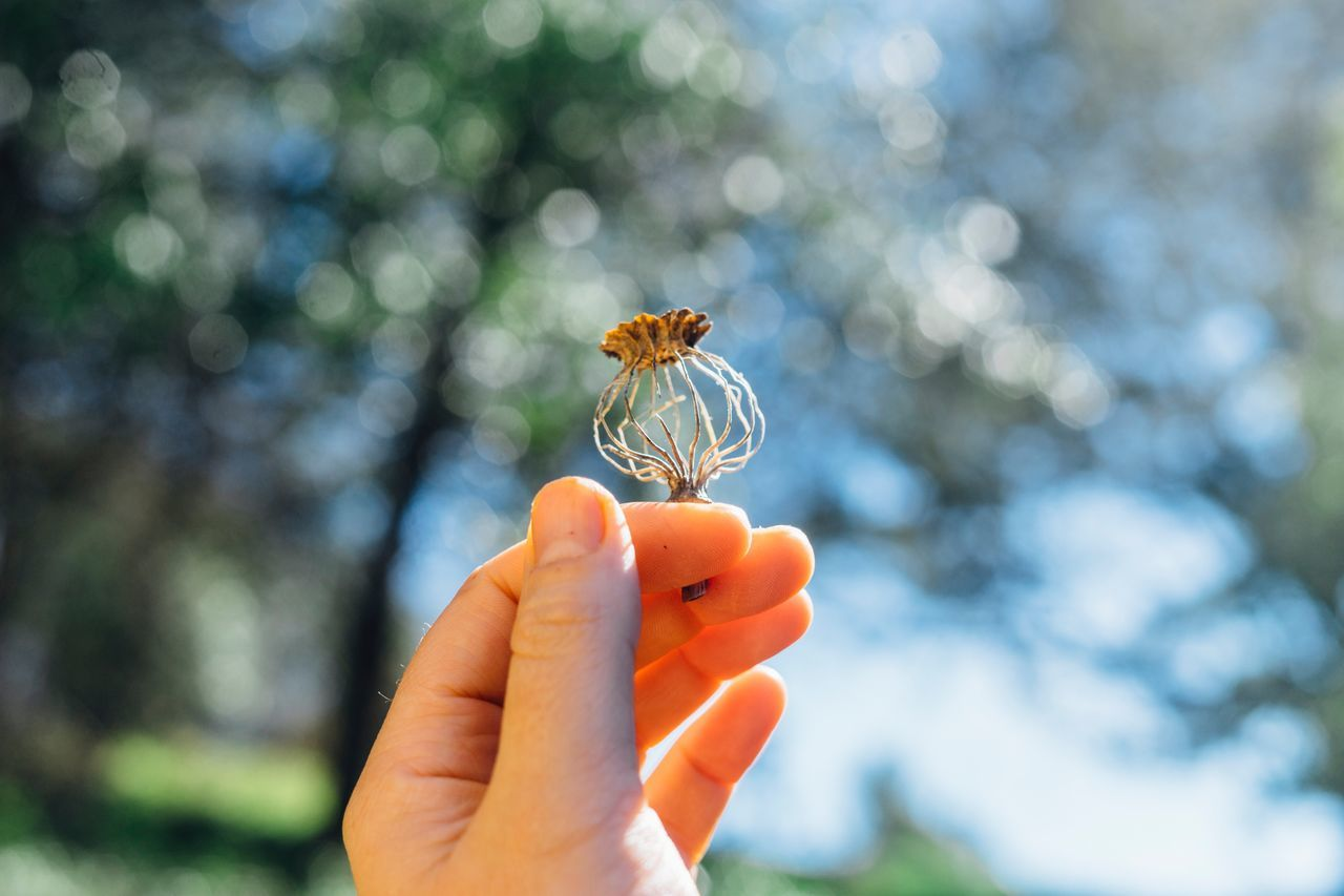 Human Hand Close-up Focus On Foreground Nature Outdoors Day Fragility Freshness Human Body Part One Person Beauty In Nature Rural Poetry Poppy Pod