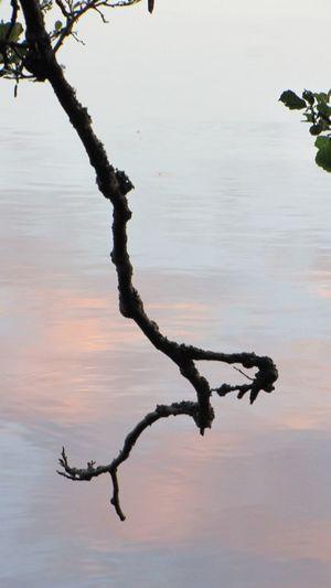 Branches Snag ветки коряга IKEBANA Bonsai бонсай бонзай Nature Fall Beauty