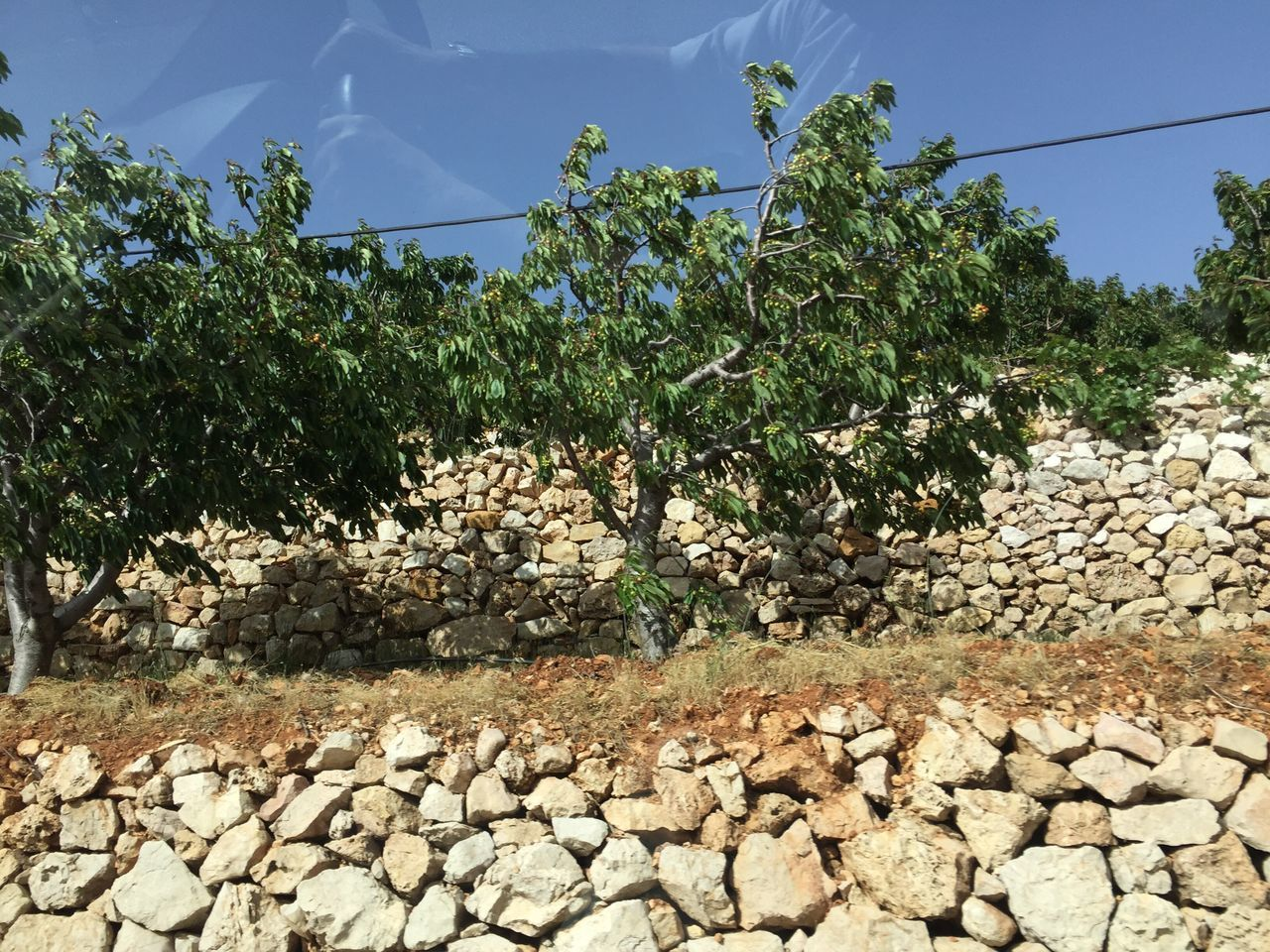 Tree Nature Day Outdoors Beauty In Nature Lebanon Driving By Stone Walls