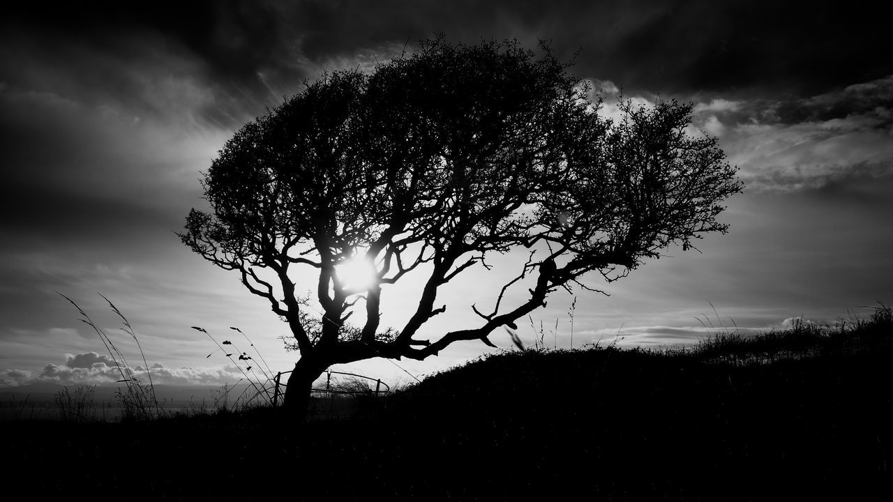 tree, sky, nature, tranquility, cloud - sky, silhouette, beauty in nature, scenics, landscape, tranquil scene, outdoors, no people, growth, day, lone, storm cloud, branch