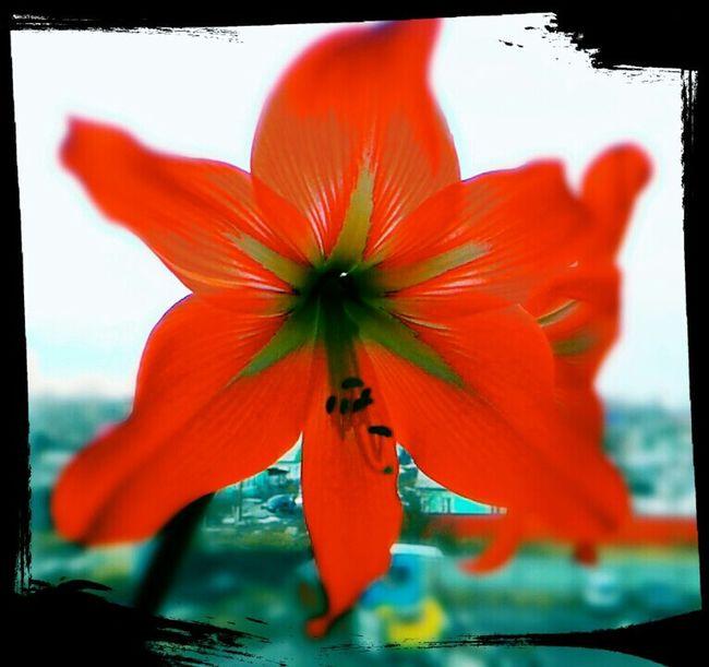 весна в нашем доме! Лесная 7