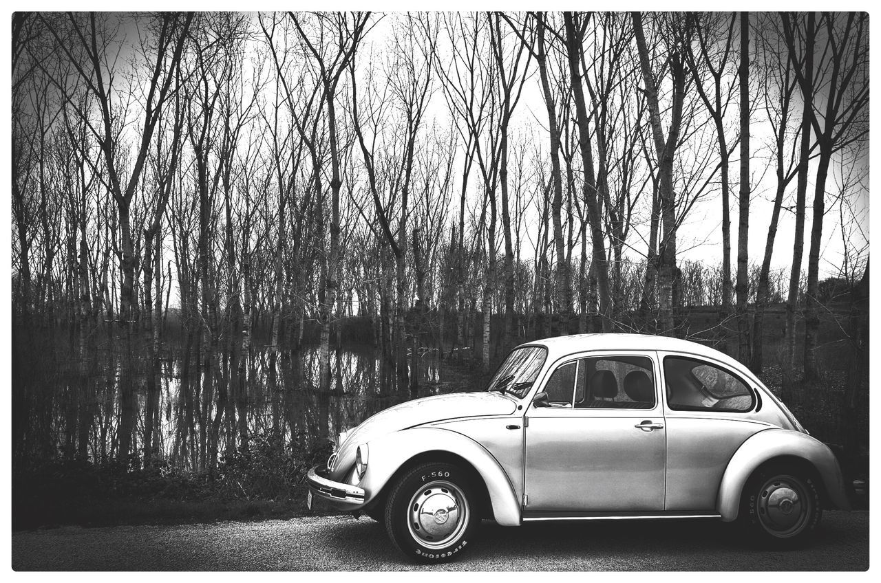 car, transportation, tree, day, bare tree, land vehicle, outdoors, no people, nature