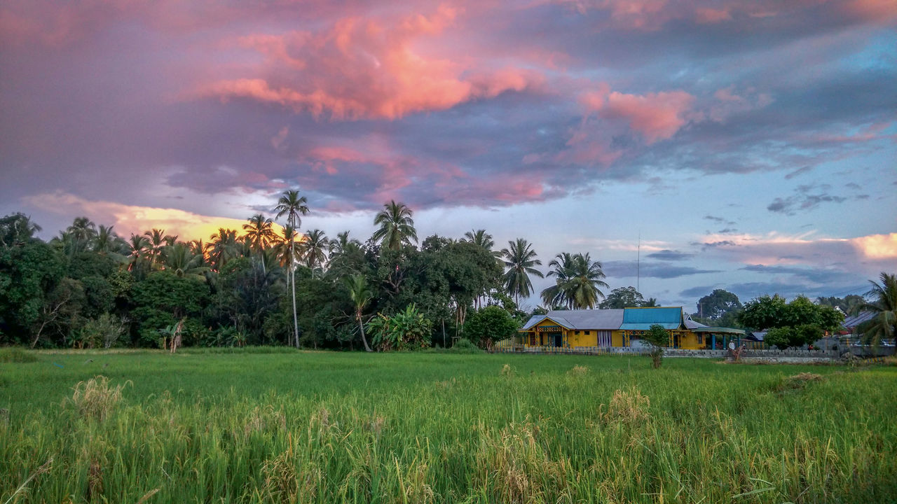 Architecture Beauty In Nature Built Structure Cloud - Sky Coconut Trees Day EyeEm Best Shots EyeEmNewHere Full Length Grass Green Color Growth House Nature No People Outdoors Paddy Field Scenics Sky Sunset Tranquil Scene Tranquility Tree The Great Outdoors - 2017 EyeEm Awards