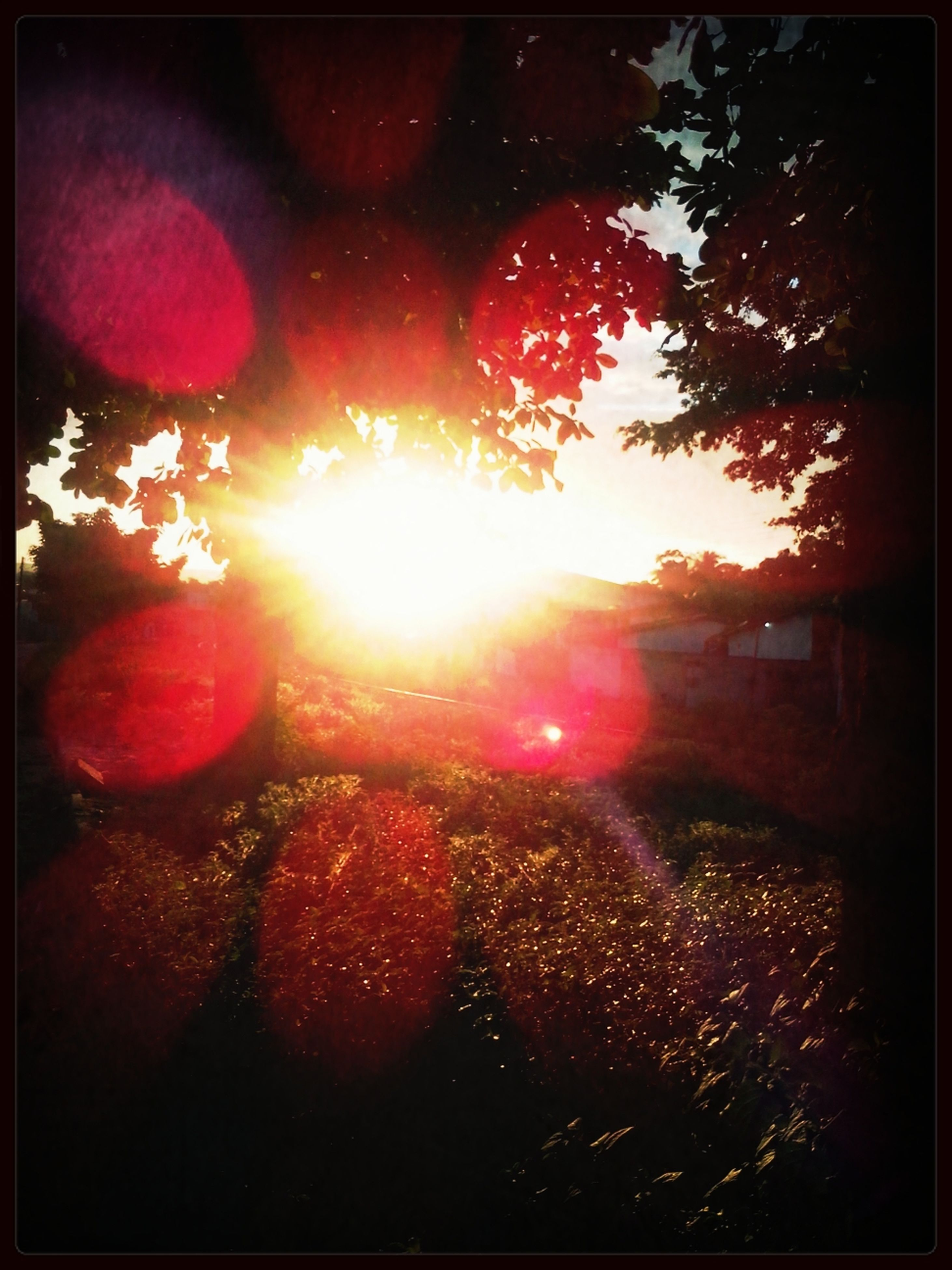 transfer print, sun, auto post production filter, tree, lens flare, sunbeam, sunlight, sunset, red, nature, sky, beauty in nature, tranquility, growth, no people, outdoors, bright, branch, scenics, tranquil scene