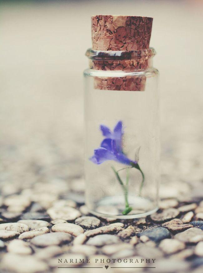 Bottle Macro Flower Narime