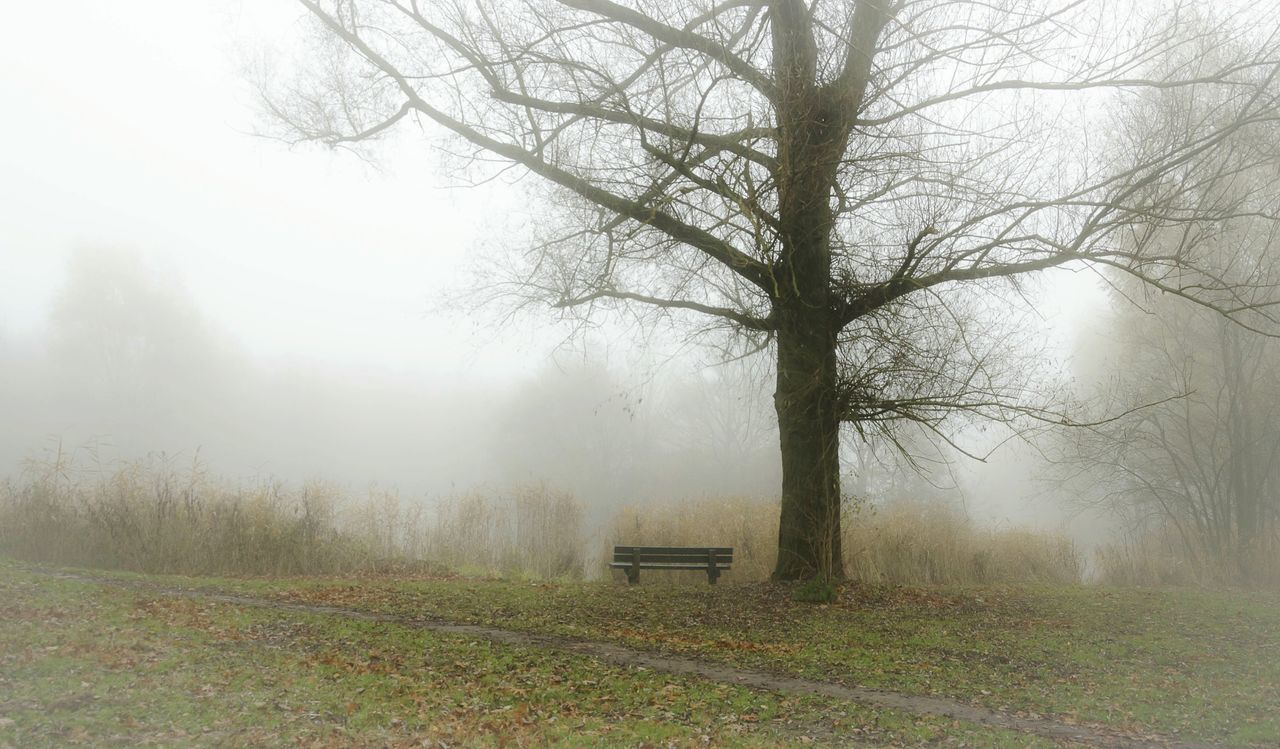 Foggy landscape in Holland Tree Fog Nature Tranquility Landscape Beauty In Nature Tranquil Scene Idyllic Hazy  Netherlands ❤ Landscapes Holland❤ Landscape_photography Landscape_Collection Water Scenics Weather