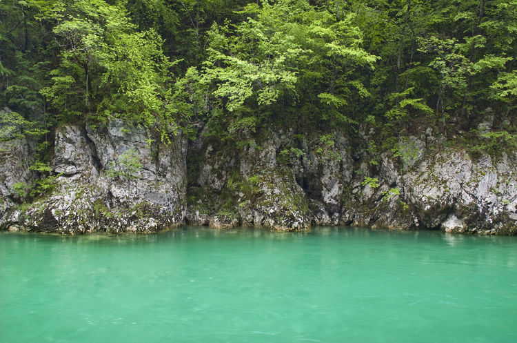 Beauty In Nature Day Durmitor, Montenegro Green Color Nacionalni Park Durmitor Nature No People Outdoors Scenics Tara River Tranquility Tree Water Waterfront