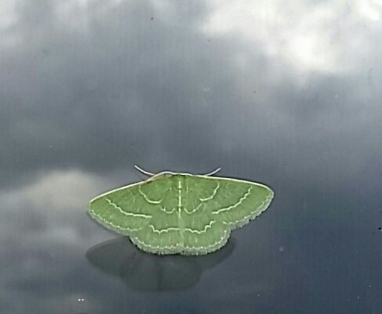 Green Nature Moth Outdoors Fine Art Photography. Reflections Shadow On Glass Window Cling Animal Photography Animals In The Wild