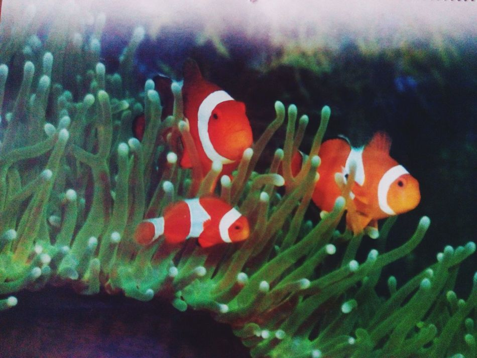 Life Underwater Nemo With Family..missing Dory:)!
