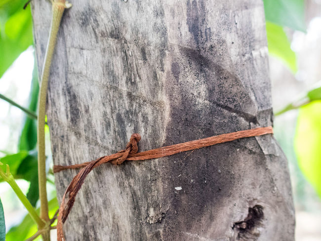 Cambodia Copy Space Philosophy Close-up Focus On Foreground Knot Remember Remembering Tree Trunk Wood - Material