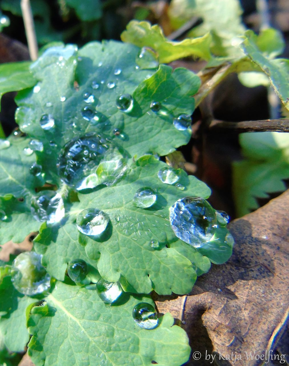 leaf, drop, growth, green color, water, nature, freshness, close-up, day, no people, plant, outdoors, beauty in nature, wet, fragility, raindrop