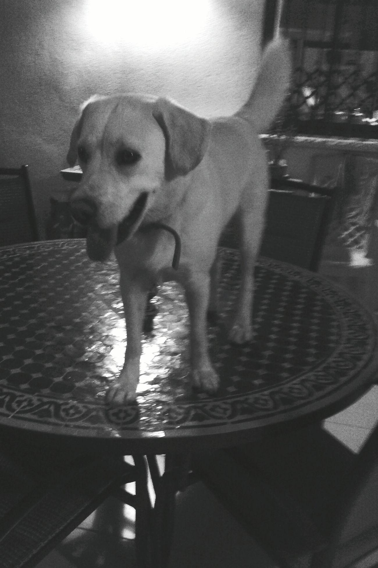 My Dog Is Cooler Than Your Kid. Juno Everyday Joy OpenEdit Blackandwhite Photography