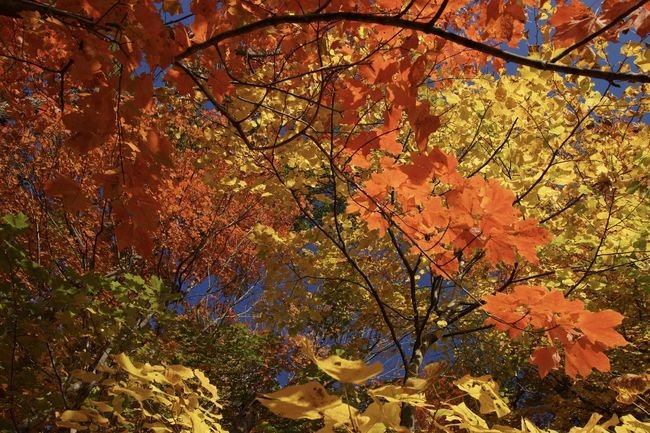 Kaleidoscope Autumn Beauty In Nature Branch Change Colorful Day Fall Fall Colors Fall Leaves Growth Multi Colored Natural Condition Nature No People Outdoors Scenics Season  Tranquil Scene Tranquility Tree Vibrant Color
