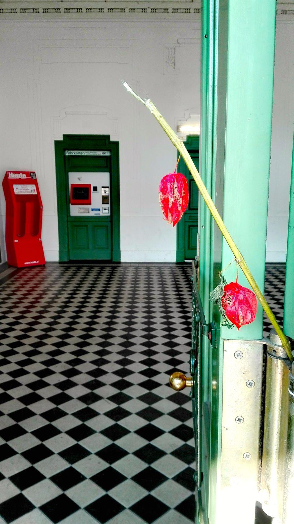 """Flowers from a Stranger"" Blume Decoration Flower Flowers From A Stranger Green Color Houseplant Pink Color Red Symbol Ubahn Ubahn Wien UbahnStation Underground Station"