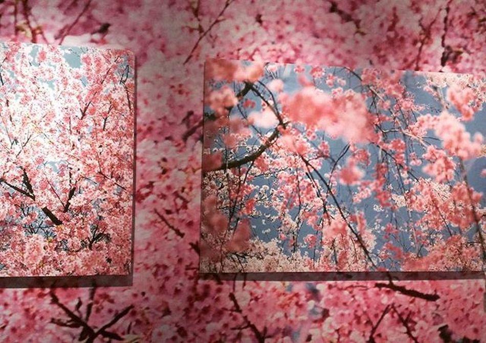 Life Vacation Trip Photograph Sakura 蜷川実花 サクラ Happy Taipei This is my favorite😍❤🌸