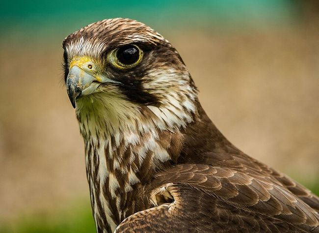 One Animal Animal Themes Bird Animals In The Wild Focus On Foreground Wildlife Beak Close-up Green Color Nature Perching Zoology Bird Of Prey Beauty In Nature No People Beauty In Nature Animals Nature_collection EyeEm Nature Lover EyeEm Best Shots