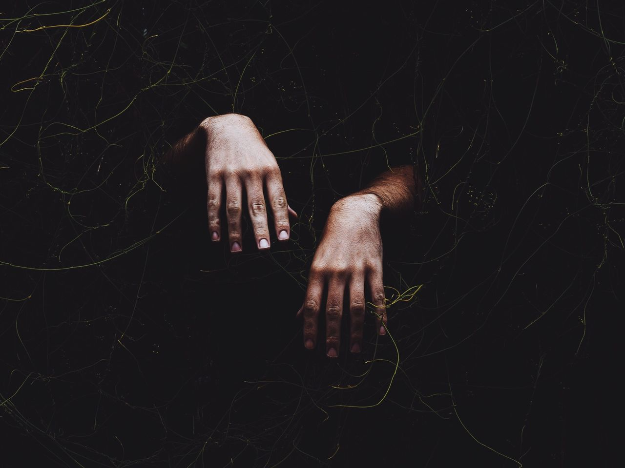 Beautiful stock photos of gothic, Covering, Cropped, Human Hand, Ivy
