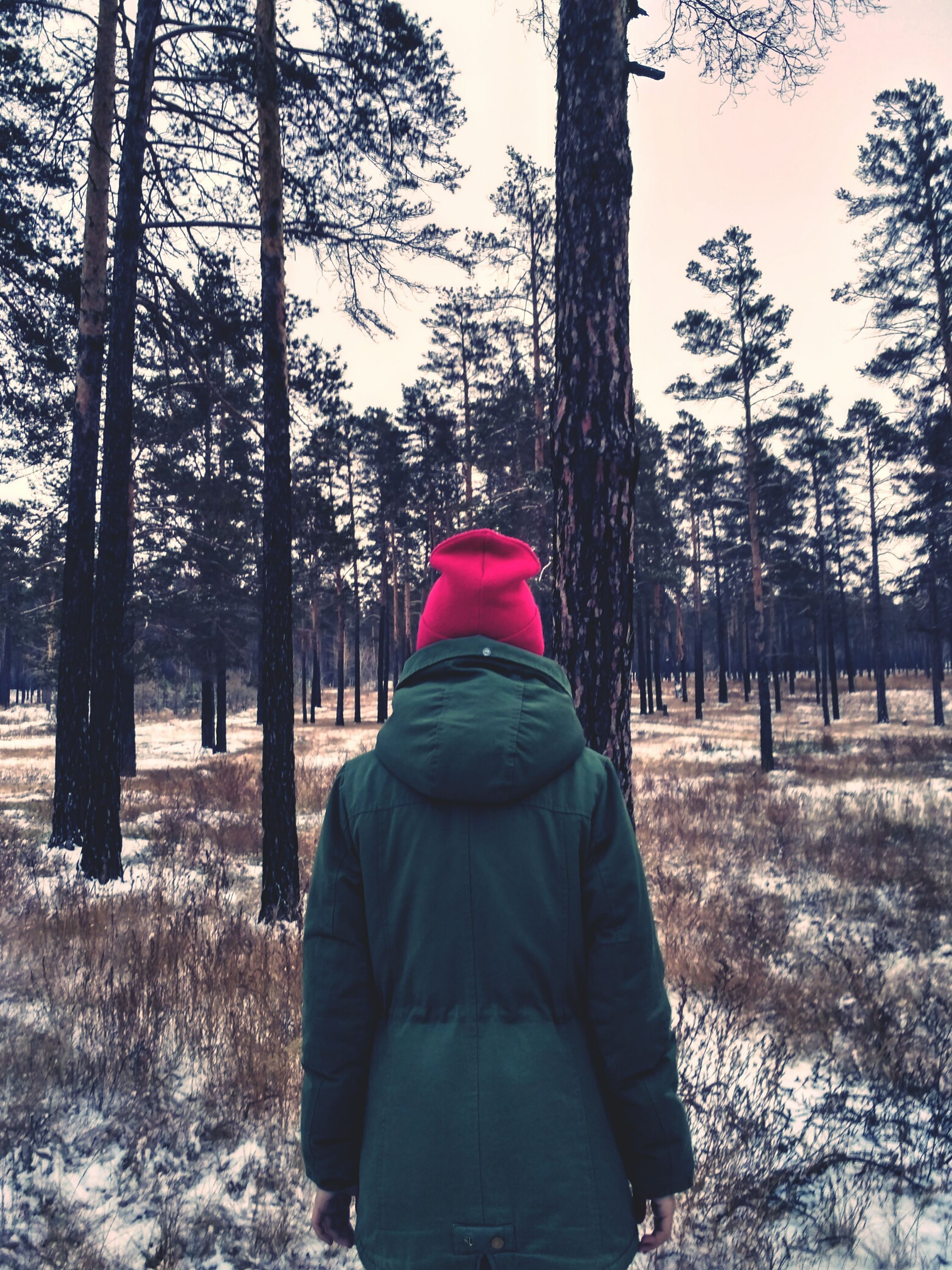 tree, cold temperature, winter, warm clothing, rear view, one person, tree trunk, red, day, outdoors, nature, people, snow, adult, adults only