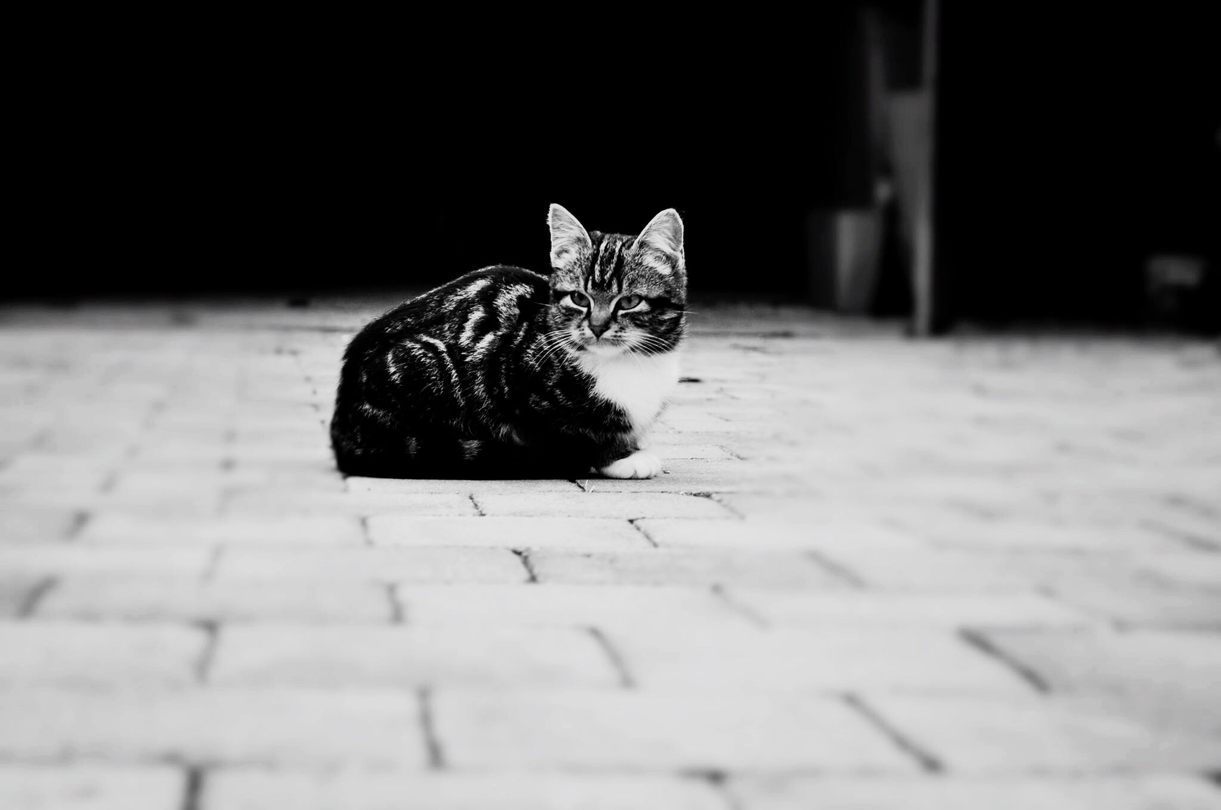 selective focus, table, indoors, surface level, domestic cat, no people, close-up, flooring, white color, cat, focus on foreground, relaxation, absence, still life, floor, empty, day, chair, home interior, wood - material