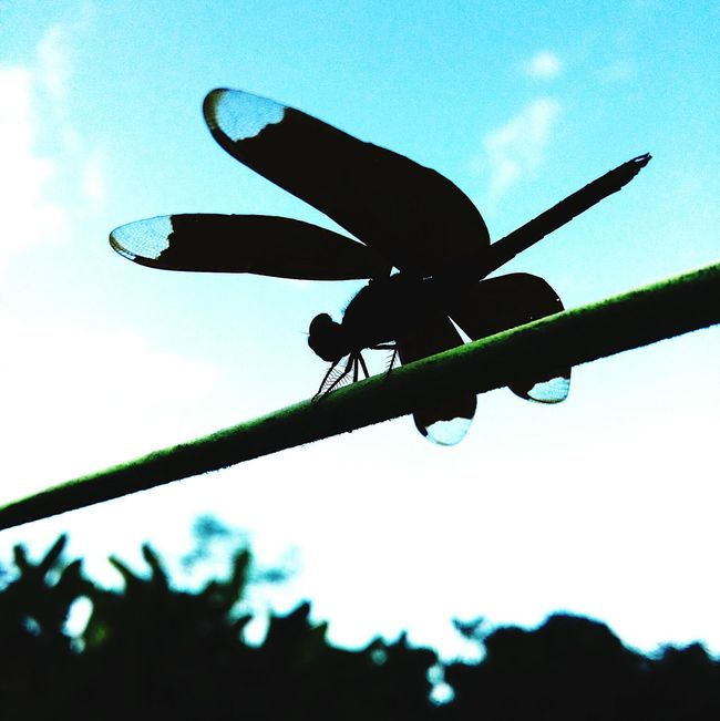 Dragon fly First Eyeem Photo