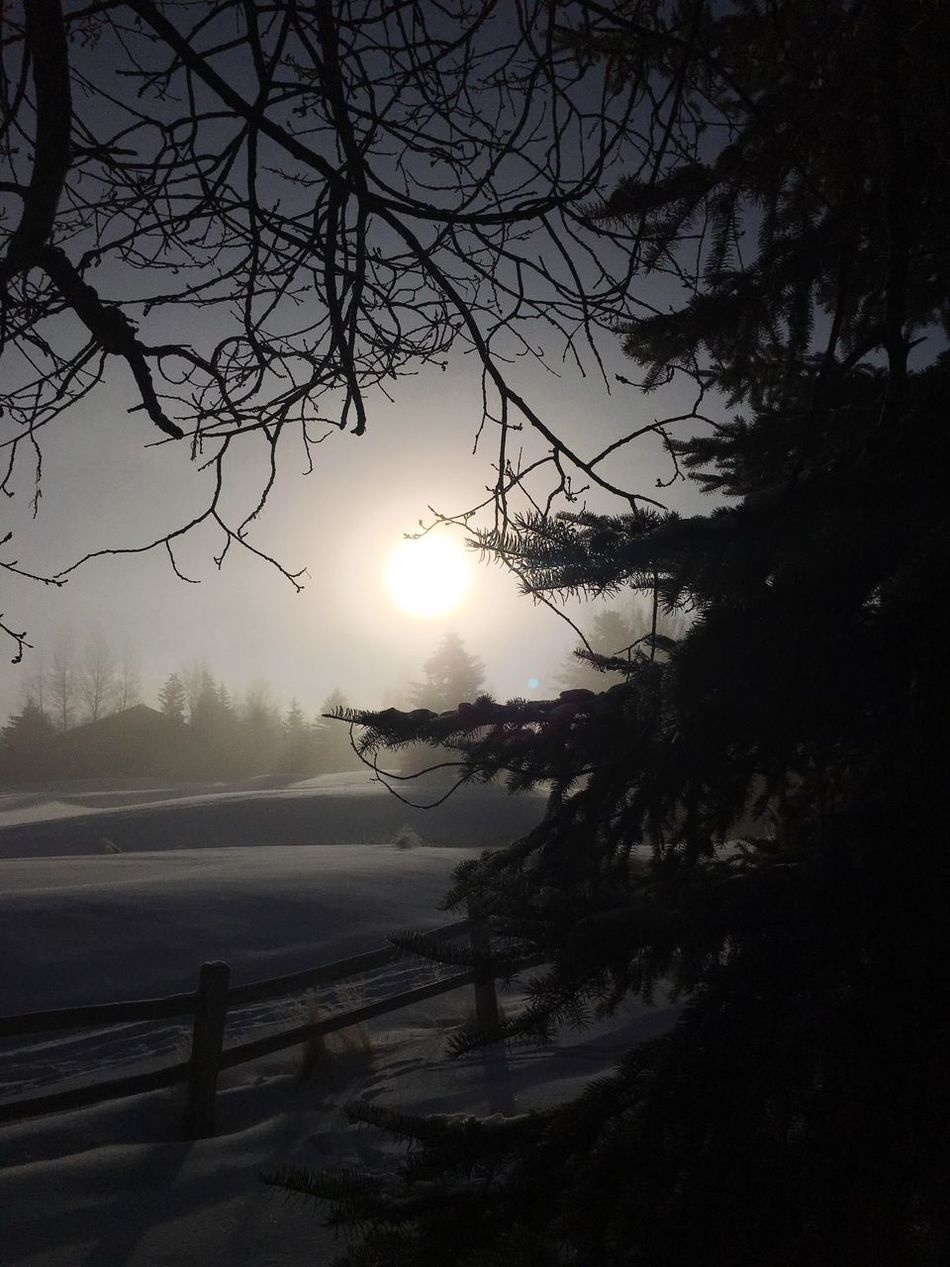 Winter wonderland Beauty In Nature Nature Branch Scenics Tranquility Tranquil Scene Winter Wonderland ❄ Silhouette Low Angle View Frosty Mornings Snowlandscapes Sunrise Silhouette Mysterious Mist Morning Light Idyllic Freshness Sunbeam Mysterious Haze Snow Covered