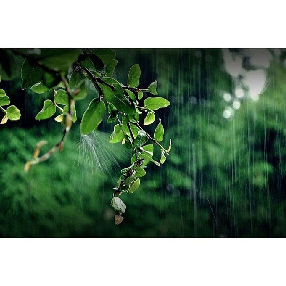 The first spell of rain always amaze Raindrops Rain Leafs FirstDrop Mardan KP KhyberPakhtoonkhawa Pakistan Amazing