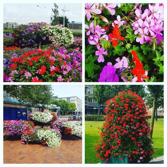 Bloemen pracht in de stad