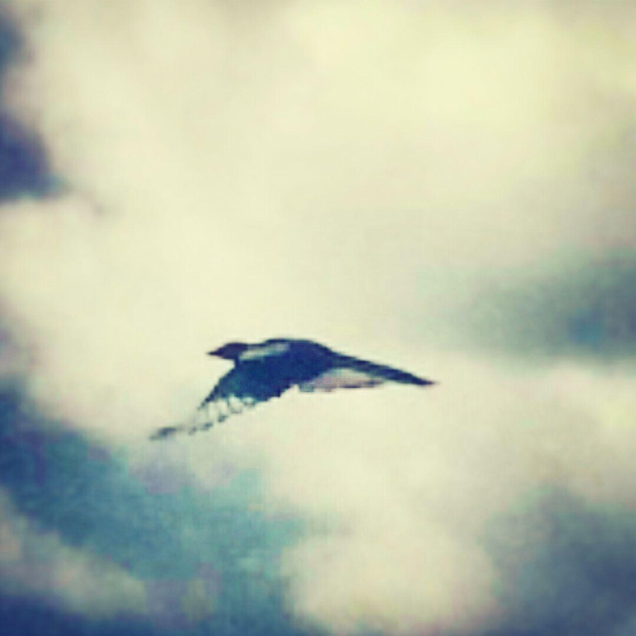"""...still flying...""...EyeEm Birds, Flying Bird, Lookingout, Skytrails"